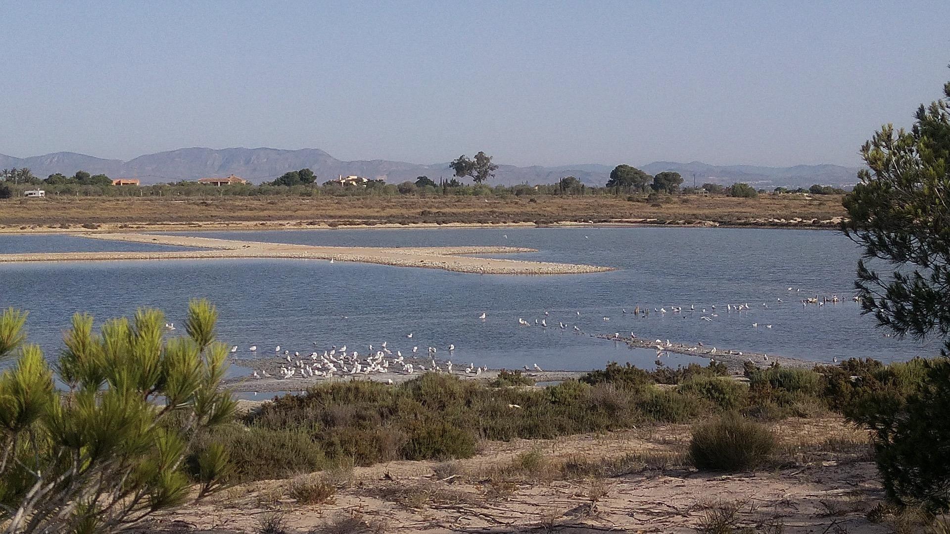Parque natural de las Salinas de Santa Pola to strefa o wyjątkowych walorach dla życia i rozwoju ptaków.